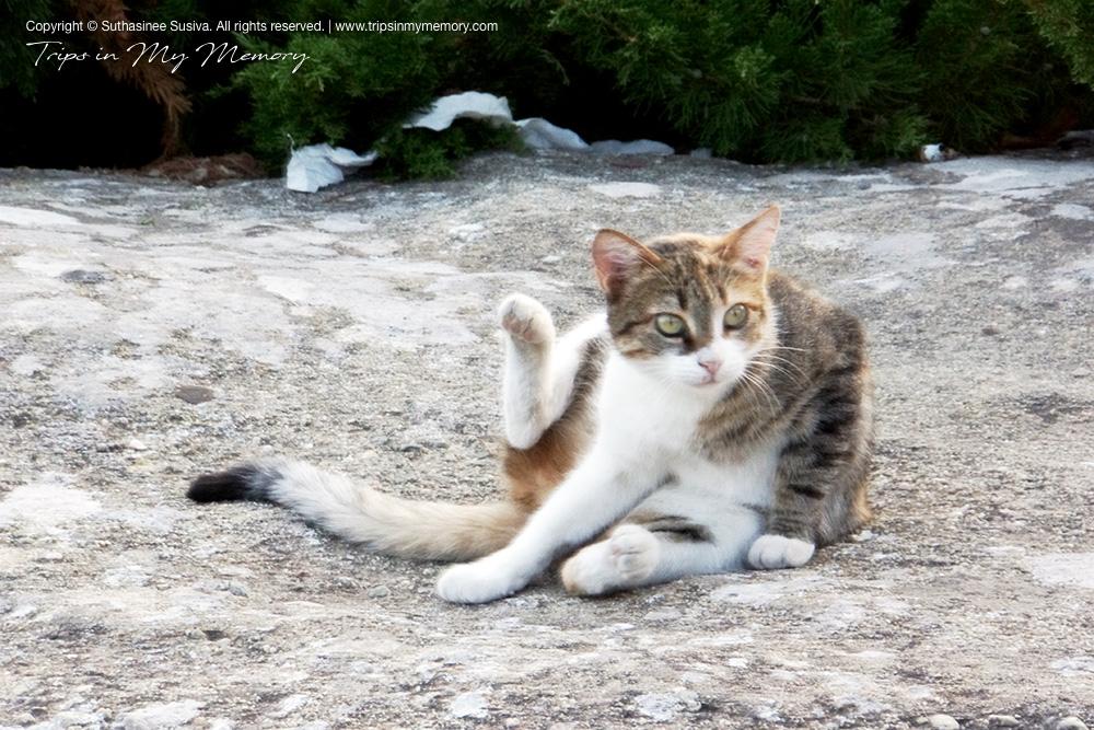 The Meteora Supermodel cat
