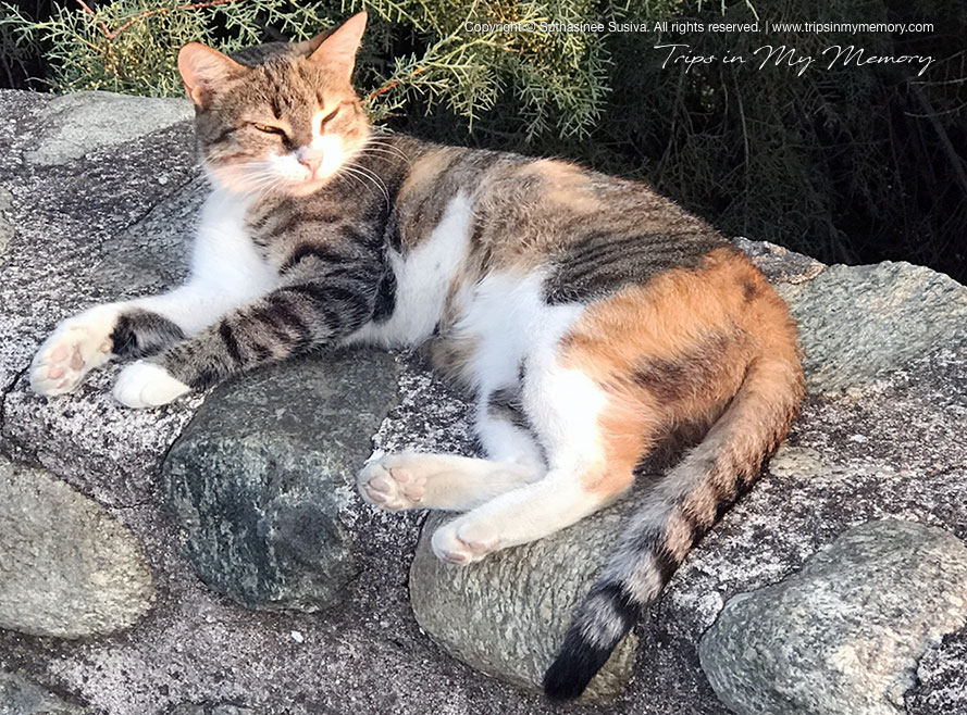 The Meteora cat