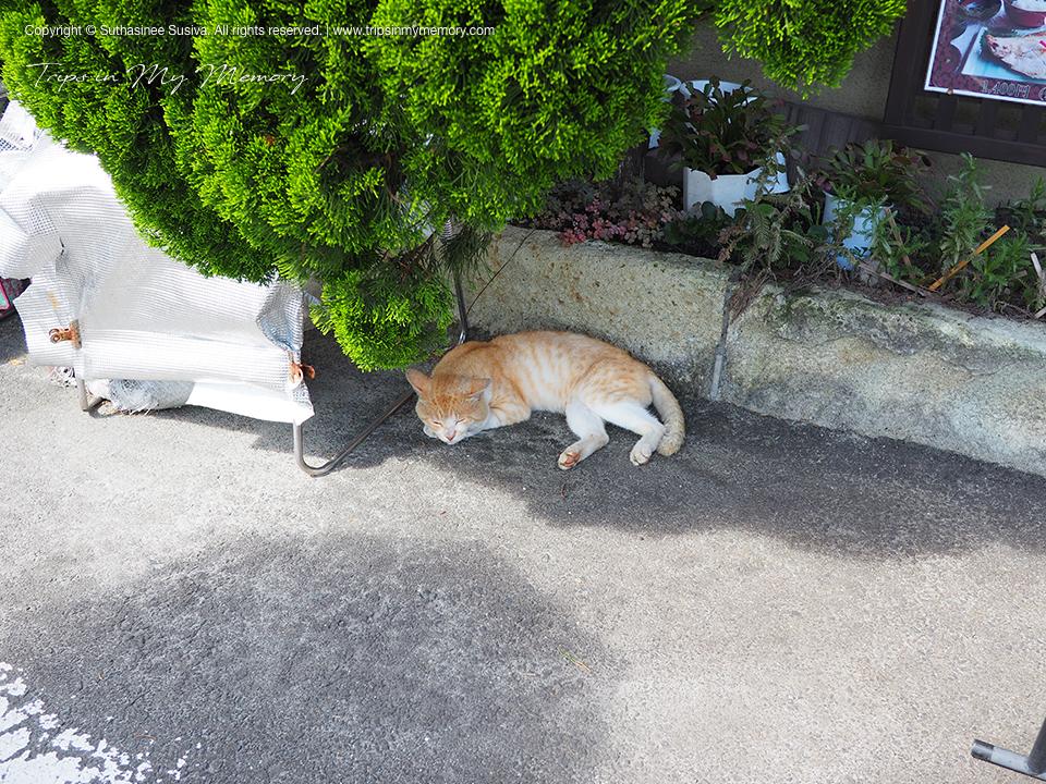 Cat behind the shade